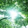 兵庫県南あわじ市の安産祈願 – 自凝島神社 (おのころ島神社)