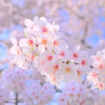 長崎県長崎市の安産祈願 -八坂 (やさか) 神社