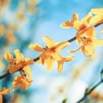 福岡県糟屋郡の安産祈願 – 宇美八幡宮 (うみはちまんぐう)