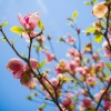 高知県高知市の安産祈願 – 薫的神社 (くんてきじんじゃ)