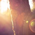 京都府京都市の安産祈願 – 敷地(しきち)神社 (わら天神)
