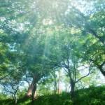 愛知県西尾市の安産祈願 – 小山田地蔵尊 萬松山 勝楽寺(しょうらくじ)