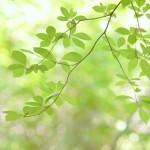 埼玉県行田市の安産祈願 – 行田八幡神社 (ぎょうだはちまんぐう)