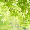 大阪府泉佐野市の安産祈願 – 日根神社 (ひねじんじゃ)