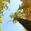 千葉県鎌ケ谷市の安産祈願 – 道野辺八幡宮 (みちのべはちまんぐう)