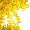 東京都西多摩郡の安産祈願 – 九頭龍神社 (くずりゅうじんじゃ)