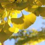 埼玉県狭山市の安産祈願 – 狭山八幡神社 (さやまはちまんじんじゃ)