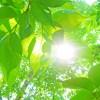 栃木県日光市の安産祈願 – 森友瀧尾神社(もりともたきのおじんじゃ)