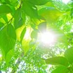 埼玉県さいたま市の安産祈願 – 岩槻 久伊豆神社 (ひさいずじんじゃ)