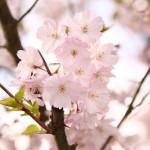 埼玉県越谷市の安産祈願 – 越谷香取神社 (かとりじんじゃ)