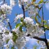 神奈川県川崎市の安産祈願 – 白幡八幡大神 (しらはたはちまんだいじん)