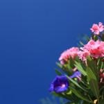愛媛県伊予郡松前町の安産祈願 – 高忍日賣神社(たかおしひめじんじゃ)