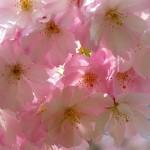 福島県郡山市の安産祈願 – 安積国造 (あさかくにつこ) 神社