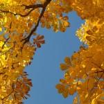 京都府京都市中京区の安産祈願 – 御所八幡宮 (ごしょはちまんぐう)
