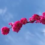 山口県下関市の安産祈願 – 忌宮 (いみのみや) 神社