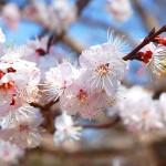 山口県山口市の安産祈願 – 今八幡宮 (いまはちまんぐう)