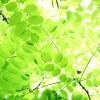 青森県北津軽郡板柳町の安産祈願 – 高増 (たかます) 神社