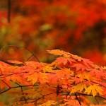 福井県福井市の安産祈願 – 足羽神社 (あすわじんじゃ)