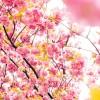 福井県福井市の安産祈願 – 和田八幡宮 (わだはちまんぐう)