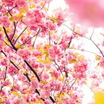 北海道旭川市の安産祈願 – 北海道護国神社 (ほっかいどうごこくじんじゃ)