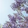 大分県別府市の安産祈願 – 八幡朝見神社 (はちまんあさみじんじゃ)