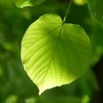 千葉県木更津市の安産祈願 – 八剱 (やつるぎ)八幡神社