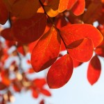 広島県呉市の安産祈願 – 亀山神社 (かめやまじんじゃ)