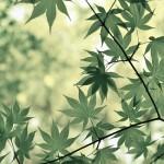 滋賀県大津市の安産祈願 – 神田神社 (かんだじんじゃ)