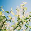 愛知県知多郡美浜町の安産祈願 – 影現寺 時志観音 (ようげんじ ときしかんのん)