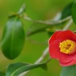 奈良県桜井市の安産祈願 – 聖林寺 (しょうりんじ)