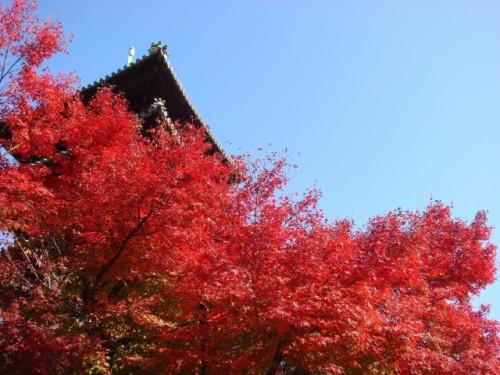 愛知県 興正寺