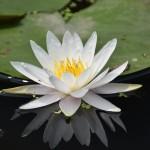 広島県尾道市の安産祈願 – 浄土寺 (じょうどじ)