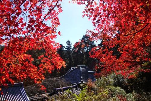 京都府 十輪寺