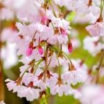 山形県鶴岡市の安産祈願 – 荘内 (しょうない) 神社