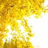 福島県福島市の安産祈願 – 福島稲荷 (ふくしまいなり) 神社
