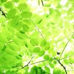 岐阜県各務原市の安産祈願 – 手力雄 (てじからお) 神社
