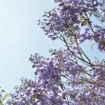 山梨県笛吹市の安産祈願 – 浅間 (あさま) 神社