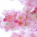 岩手県盛岡市の安産祈願 – 櫻山 (さくらやま) 神社