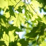 千葉県館山市の安産祈願 – 安房 (あわ) 神社