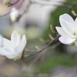 岐阜県土岐市の安産祈願 – 駄知 白山 (ときし はくさん) 神社