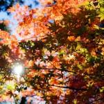 島根県出雲市の安産祈願 – 須佐神社 (すさじんじゃ)