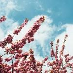 鳥取県米子市の安産祈願 – 賀茂 (かも) 神社