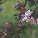 滋賀県長浜市の安産祈願 – 長浜八幡宮(ながはまはちまんぐう)