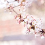 広島県広島市の安産祈願 – 広島東照宮 (ひろしまとうしょうぐう)