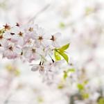 広島県広島市の安産祈願 – 比治山神社 (ひじやまじんじゃ)