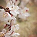岡山県岡山市の安産祈願 – 吉備津神社 (きびつじんじゃ)