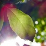 岡山県岡山市の安産祈願 – 吉備津彦神社 (きびつひこじんじゃ)