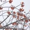 鹿児島県鹿児島市の安産祈願 – 花尾 (はなお) 神社