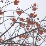 岡山県和気郡和気町の安産祈願 – 和気神社 (わけじんじゃ)