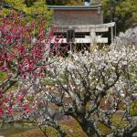 京都府伏見区の安産祈願 – 城南宮 (じょうなんぐう)